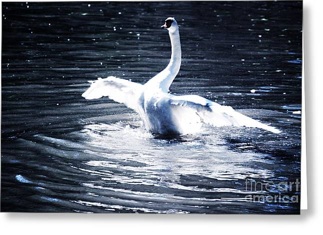 Swan Greeting Card by HD Connelly