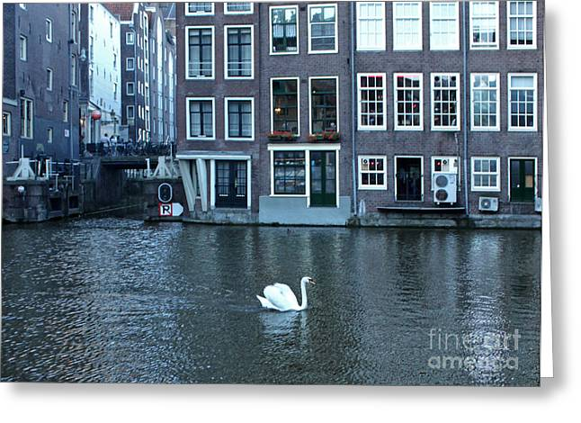 Swan In Amsterdam Greeting Card by Gregory Dyer