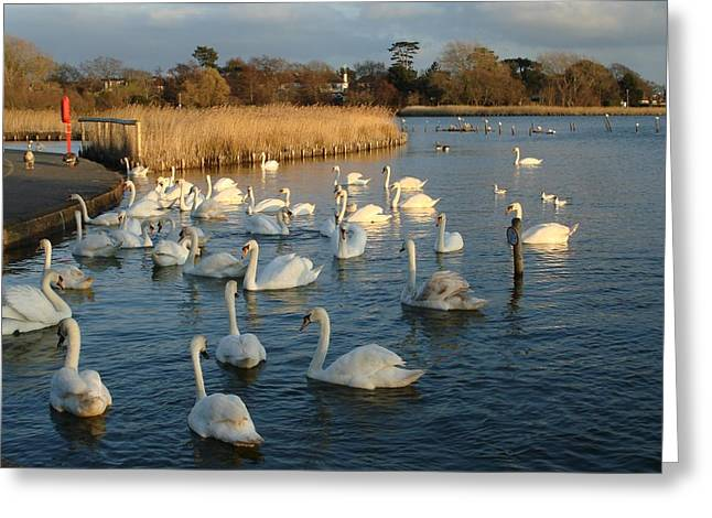 Greeting Card featuring the photograph Swan Lake by Katy Mei