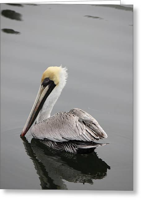Swan Of The Gulf Coast Greeting Card by Deborah Hughes