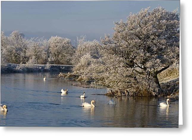 Greeting Card featuring the photograph Swan Patrol by Rob Hemphill