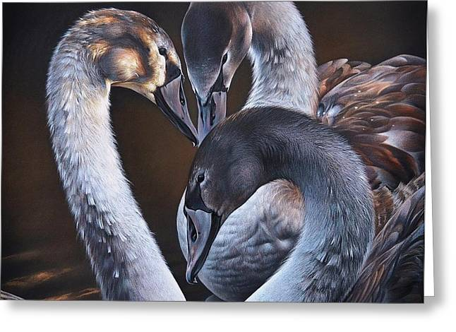 Swan Whispers Greeting Card