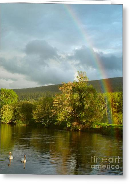 Swans And Double Rainbow 2 Greeting Card