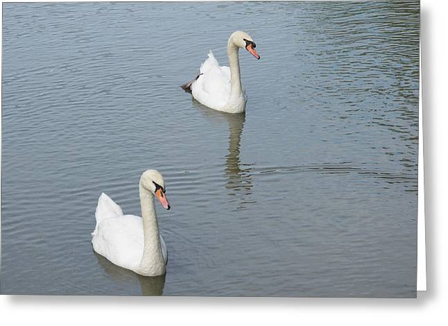 Swans Drifting Along Greeting Card by Corinne Elizabeth Cowherd