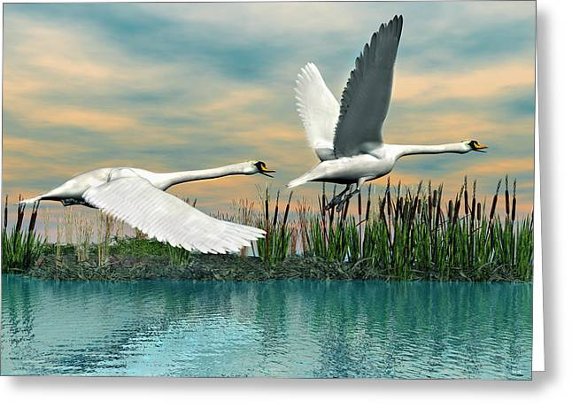 Swans In Flight Greeting Card by Walter Colvin