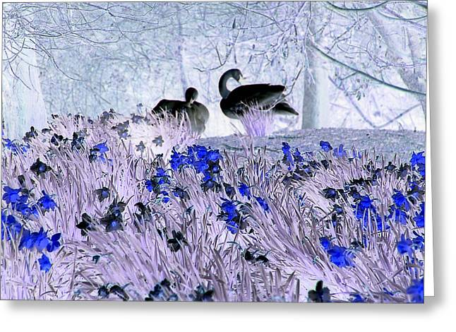 Swans In The Blue Greeting Card by Fred Whalley