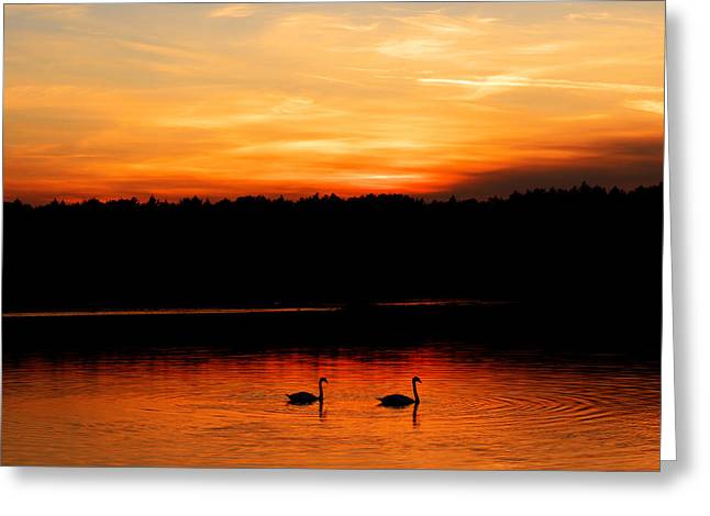 Swans In The Sunset Greeting Card