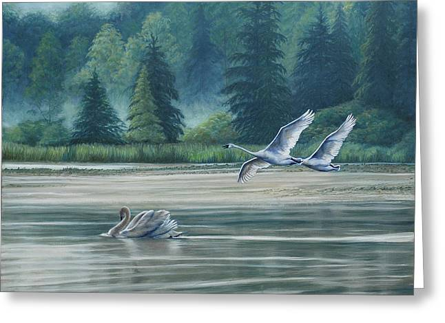 Swans On Carter Lake Greeting Card by Ruth Gee
