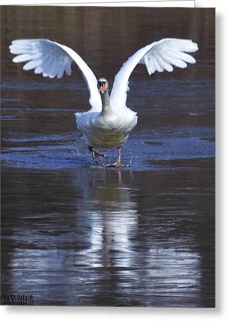 Greeting Card featuring the photograph Swans On Ice 2 by Brian Stevens