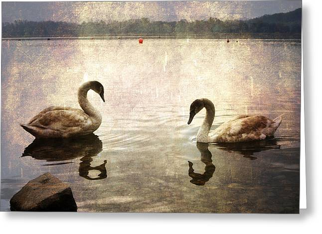 swans on Lake Varese in Italy Greeting Card by Joana Kruse