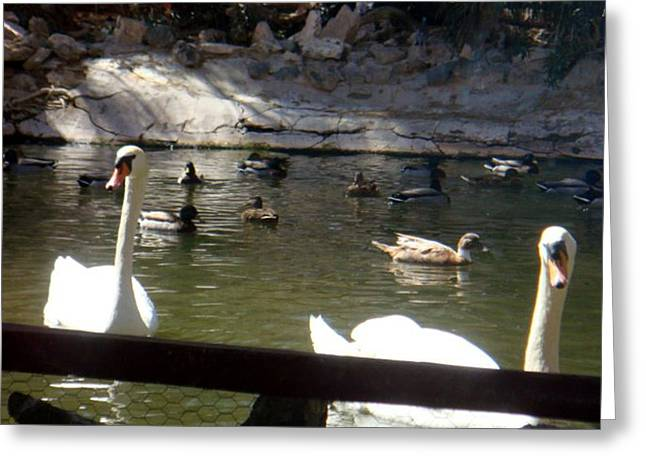 Swans On The Lake Greeting Card by De Beall