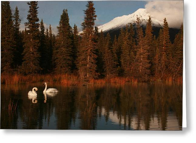 Swans Wrangell St. Elias National Park And Preserve Greeting Card