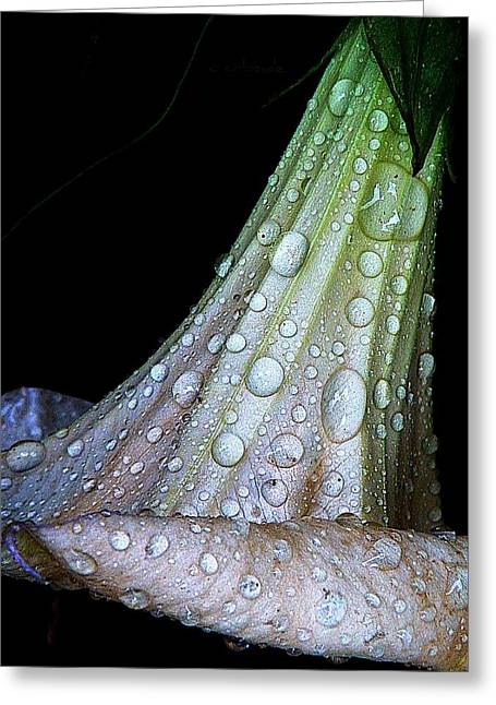 Sweet And Rainy Greeting Card by Chris Berry
