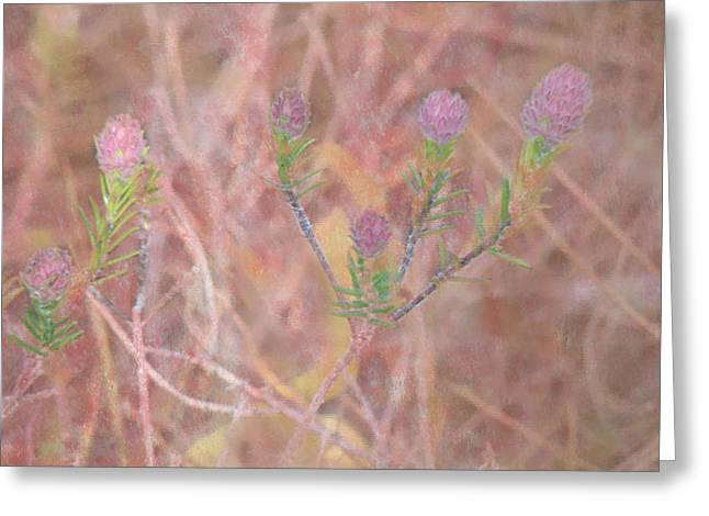 Sweet Clover Greeting Card