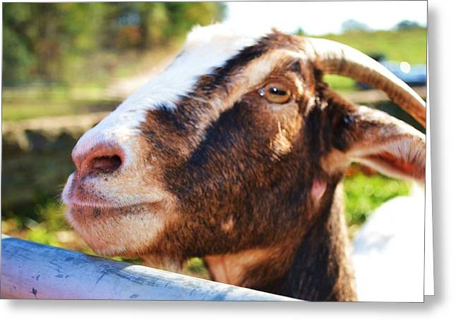 Greeting Card featuring the photograph Sweet Goat by Mary Zeman