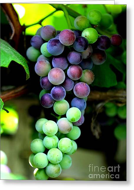 Sweet Grapes Greeting Card by Carol Groenen