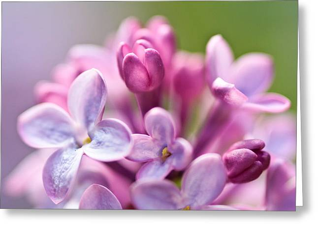 Sweet Lilac Greeting Card by Mitch Shindelbower
