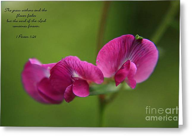 Sweet Pea Flower Greeting Card