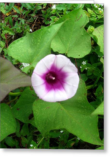 Sweet Purple Flower Greeting Card by Juliana  Blessington