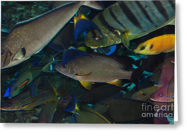 Swimming Fish Greeting Card by Andrea Simon