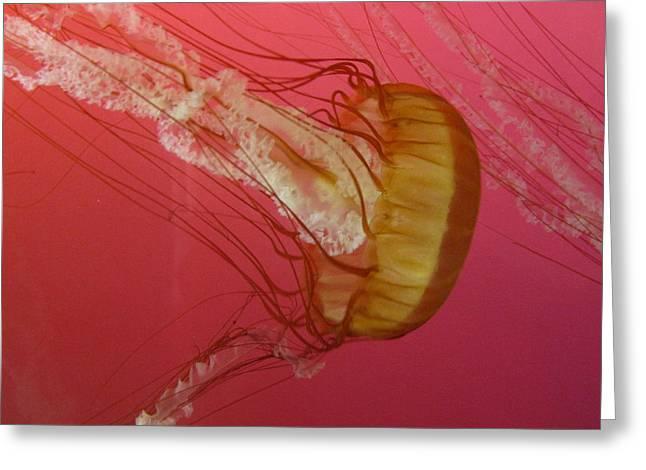 Swimming Jelly Greeting Card by Vijay Sharon Govender