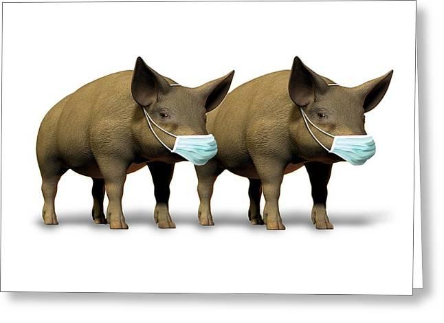 Swine Flu, Conceptual Image Greeting Card
