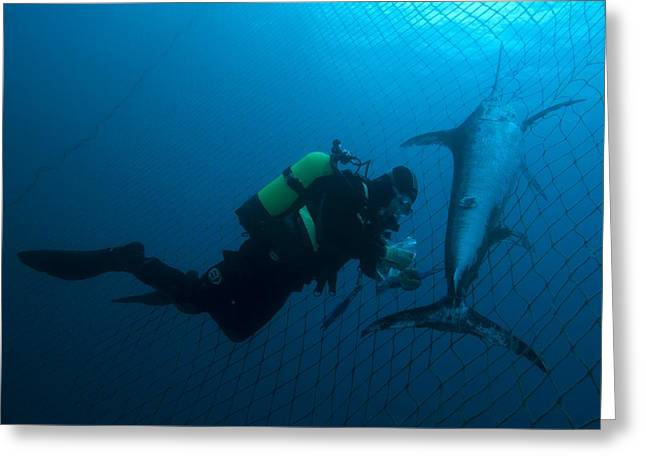 Swordfish In A Fishing Net Greeting Card by Angel Fitor