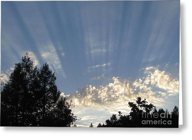 Symphonic Photography Greeting Card by Tina Marie