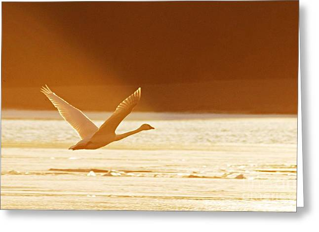 Takeoff At Sunset Greeting Card by Larry Ricker