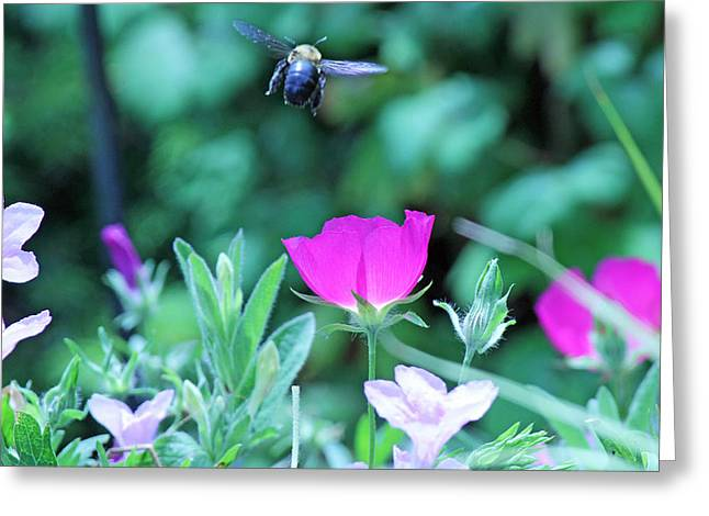 Takeoff Greeting Card by Becky Lodes