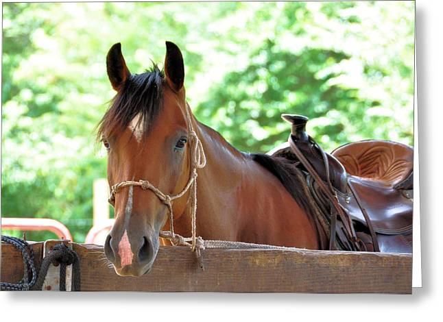 Taking A Break Greeting Card by Jan Amiss Photography