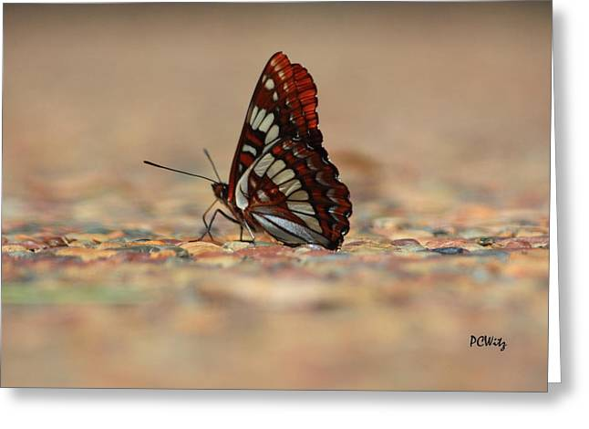 Greeting Card featuring the photograph Taking A Breather by Patrick Witz