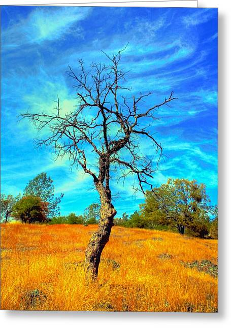 Tall Bare Tree With White Clouds And Blue Sky. Greeting Card by Gregory Dean