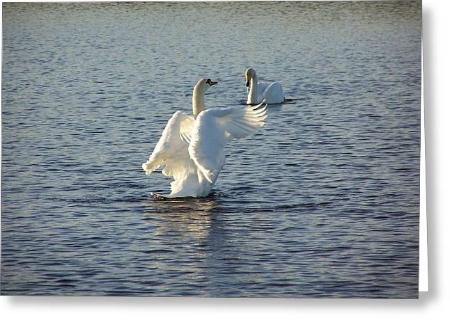 Tall Swan Greeting Card by George Leask