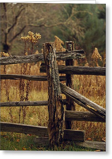 Tall Weeds In Autumn Brown Greeting Card by Raymond Gehman