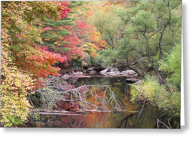 Tanasee Creek In The Fall Greeting Card