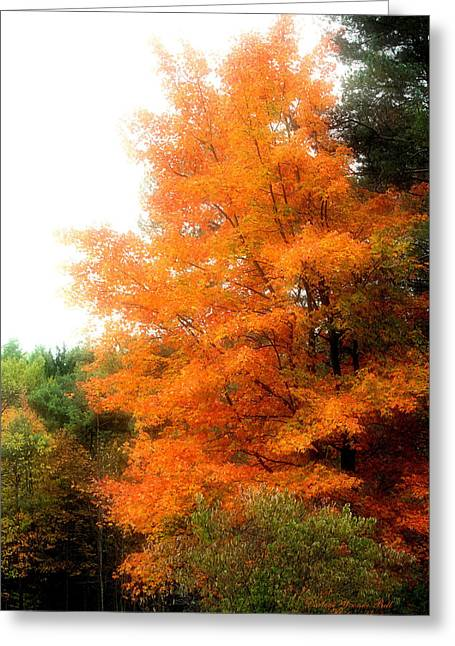 Tangerine Autumn  Greeting Card by Darlene Bell