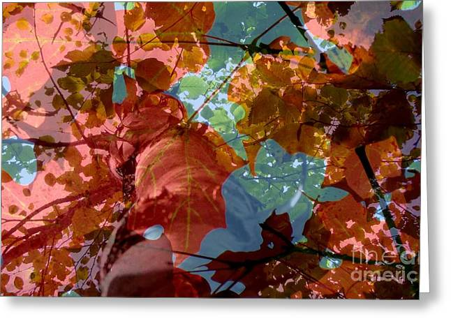 Greeting Card featuring the photograph Tapestry Of Autumn 2 by France Laliberte