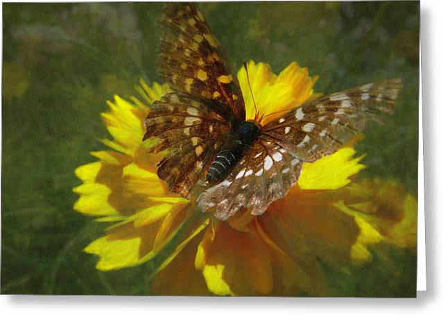Tattered Wings Greeting Card by Cindy Wright
