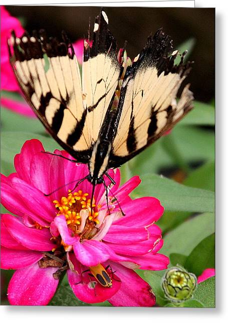 Greeting Card featuring the photograph Tattered Wings Number Two by Paula Tohline Calhoun