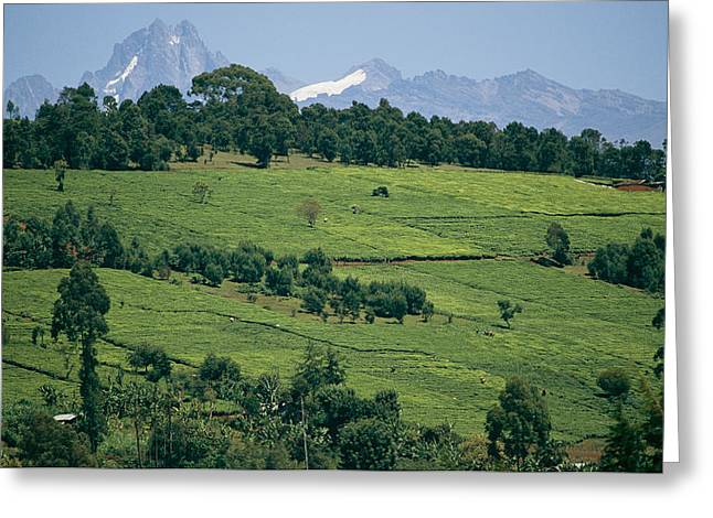 Tea Plantations Covering The Hills Greeting Card