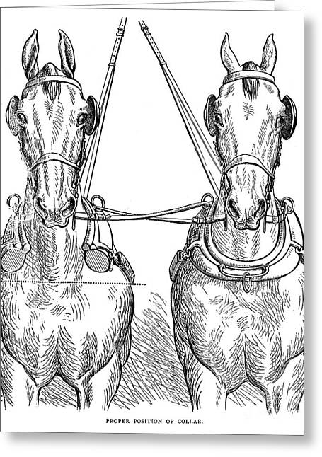 Team Of Horses, 1875 Greeting Card