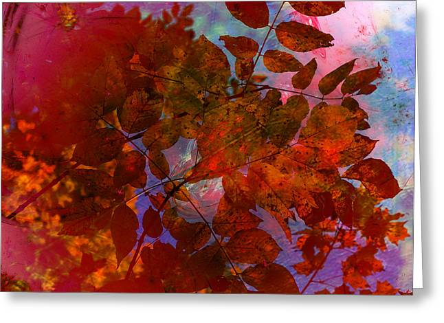 Tears Of Leaf  Greeting Card by Jerry Cordeiro