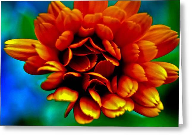 Technicolor Flower Greeting Card