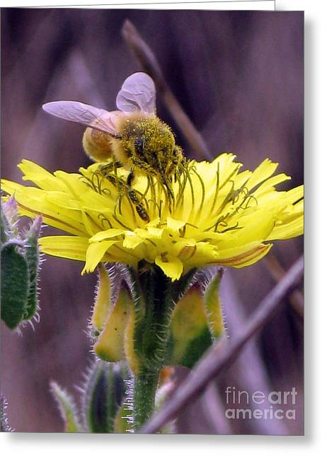 Greeting Card featuring the photograph Teeny Tiny by Leslie Hunziker