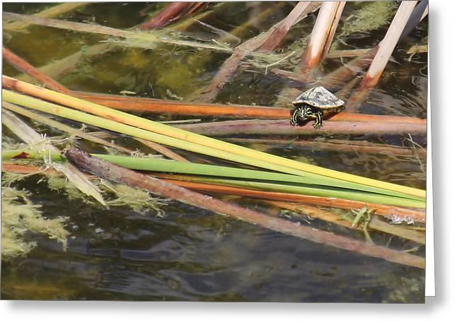 Teeny Tiny Turtle Greeting Card by Rosalie Scanlon
