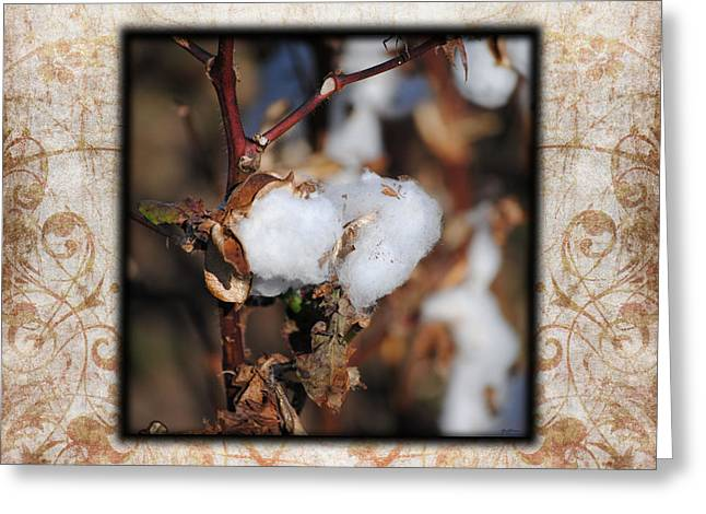 Tennessee Cotton I Photo Square Greeting Card by Jai Johnson