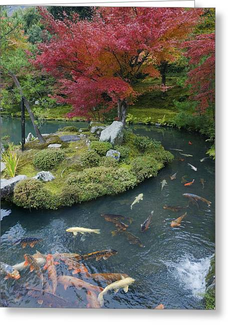 Pond In Park Greeting Cards - Tenryuji Temple Is A Zen Buddhist Greeting Card by Rob Tilley