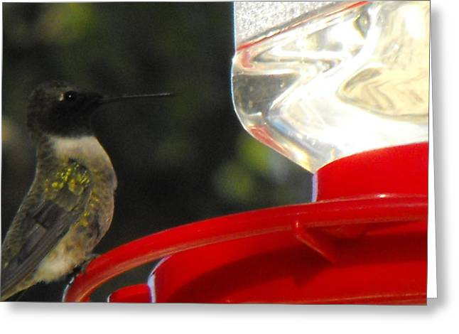 Texas Hummingbird Greeting Card by Rebecca Cearley