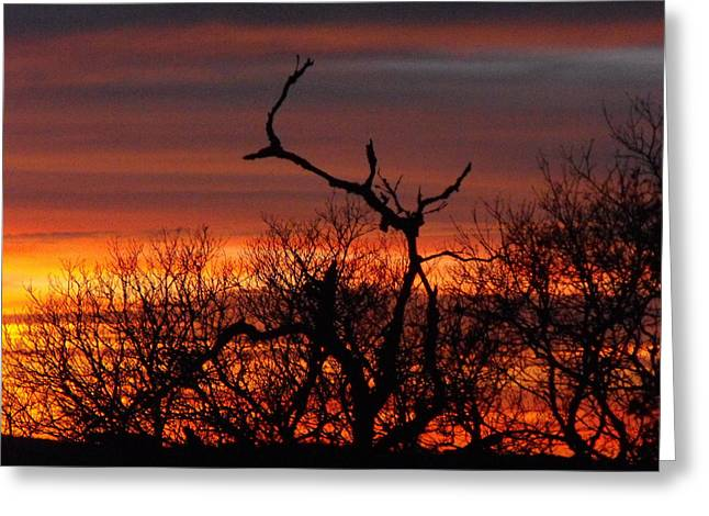 Texas Spanish Oak Tree  Sunset Greeting Card by Rebecca Cearley